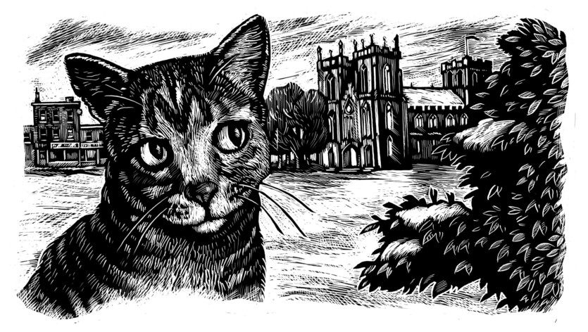 Cat-in-Cathedral-BGallagher