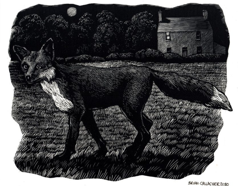 Fox-600-lowres